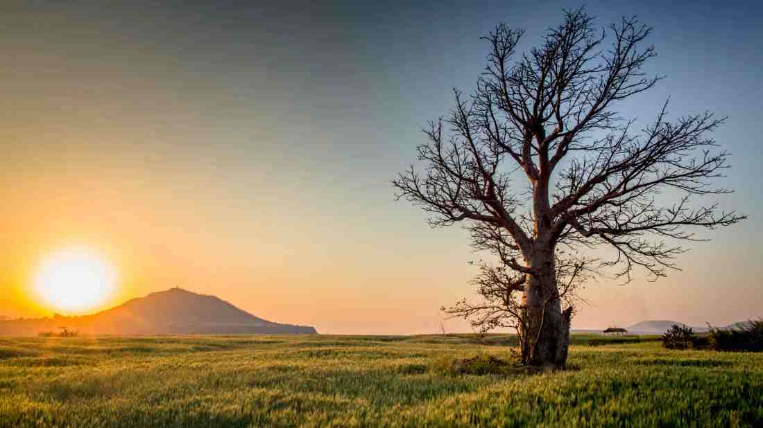 Tree(via-SobrietyTree.home.blog)-by-Suni-Patel-on-Pixabay-backlit-countryside-dawn-599708(Compressed)