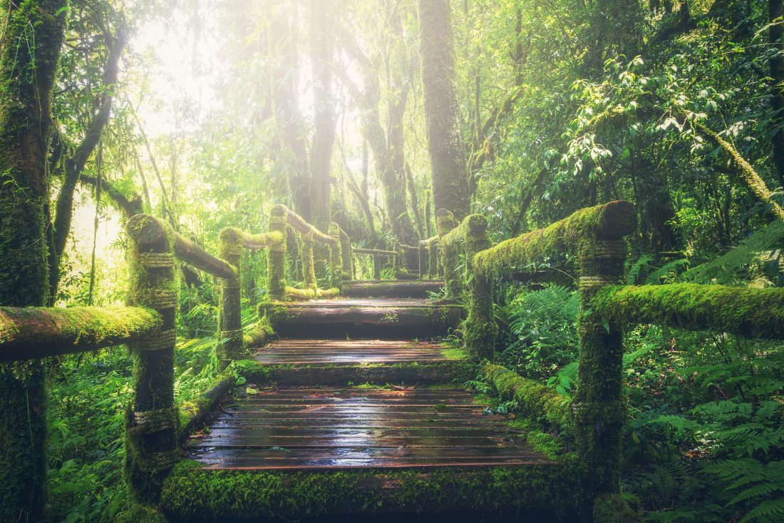 Wooden-Bridge-on-Rainforest-royalty-free-pixabay-adventure-beautiful-boardwalk-235734(via-sobrietytree.home.blog)